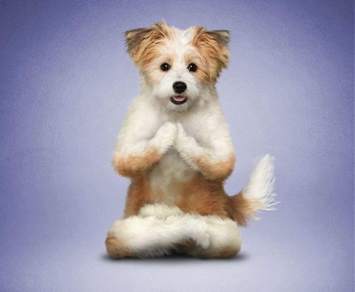 DOGA (dog yoga) beginning Saturday 15th May. Kennington Park