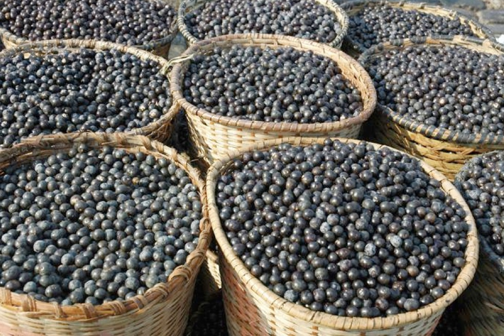 Are Acai Berries Worth the Hype?